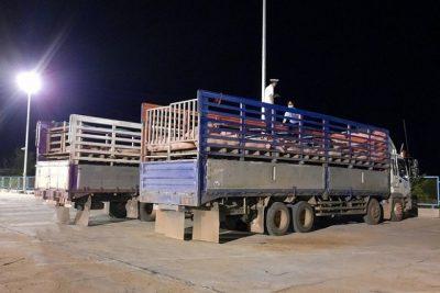 Giá lợn hơi trong nước giảm sau khi nhập lợn sống từ Thái Lan.